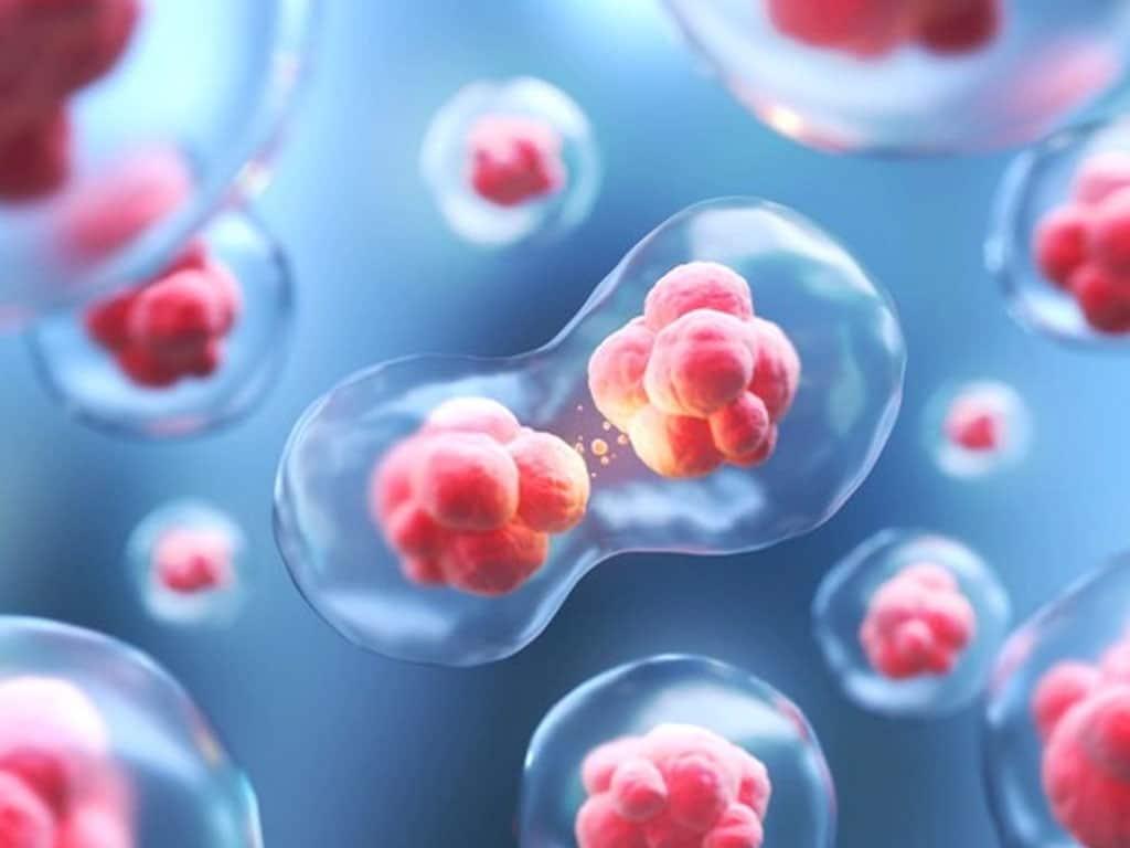 Células madre en la ginecología