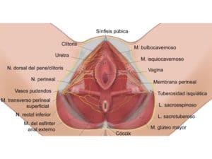 Colpoperineoplastia
